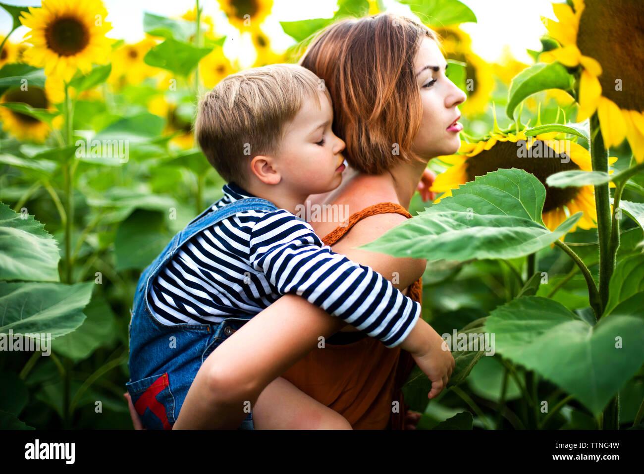 Femme debout dans le champ de tournesol, tenant son fils sur son dos. Banque D'Images