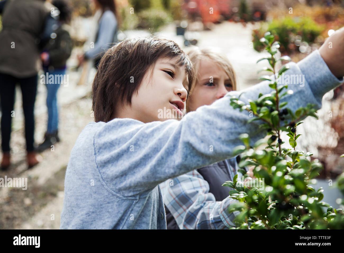 Les garçons curieux examinent les plantes pendant le voyage Photo Stock