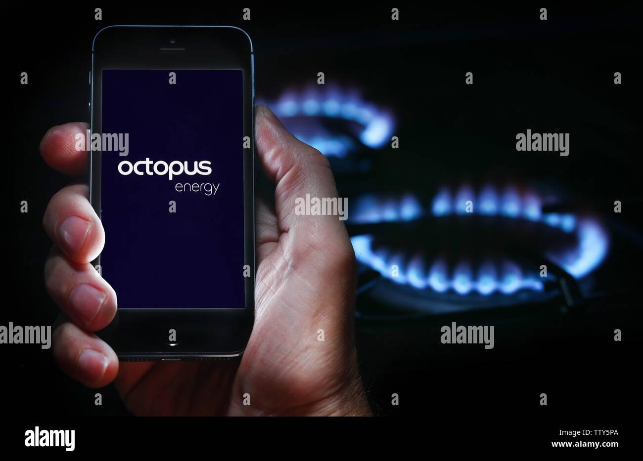 Un homme à la recherche sur le site web logo pour société de l'énergie Énergie Octopus sur son téléphone devant sa cuisinière à gaz (usage éditorial uniquement) Banque D'Images