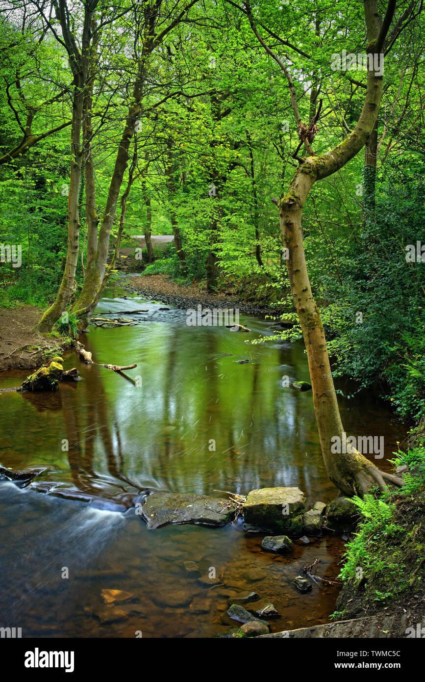 UK,South Yorkshire,Sheffield Rivelin Valley,Rivière,près de Stepping Stones,Rivelin Banque Walkley Tilt Banque D'Images