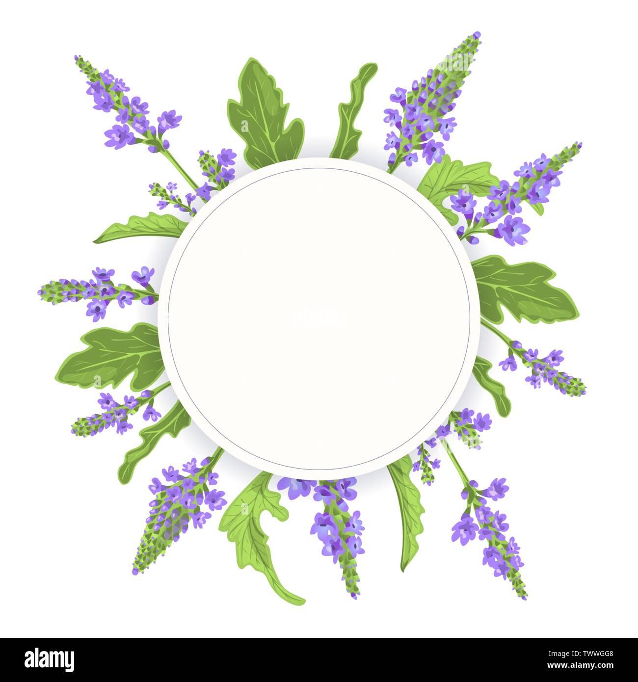 Verveine feuille cercle rond badge. branche, les fleurs et les feuilles. Verveine Herb modèle. pour la médecine alternative, les produits cosmétiques, produits de soins de santé, aromathe Photo Stock