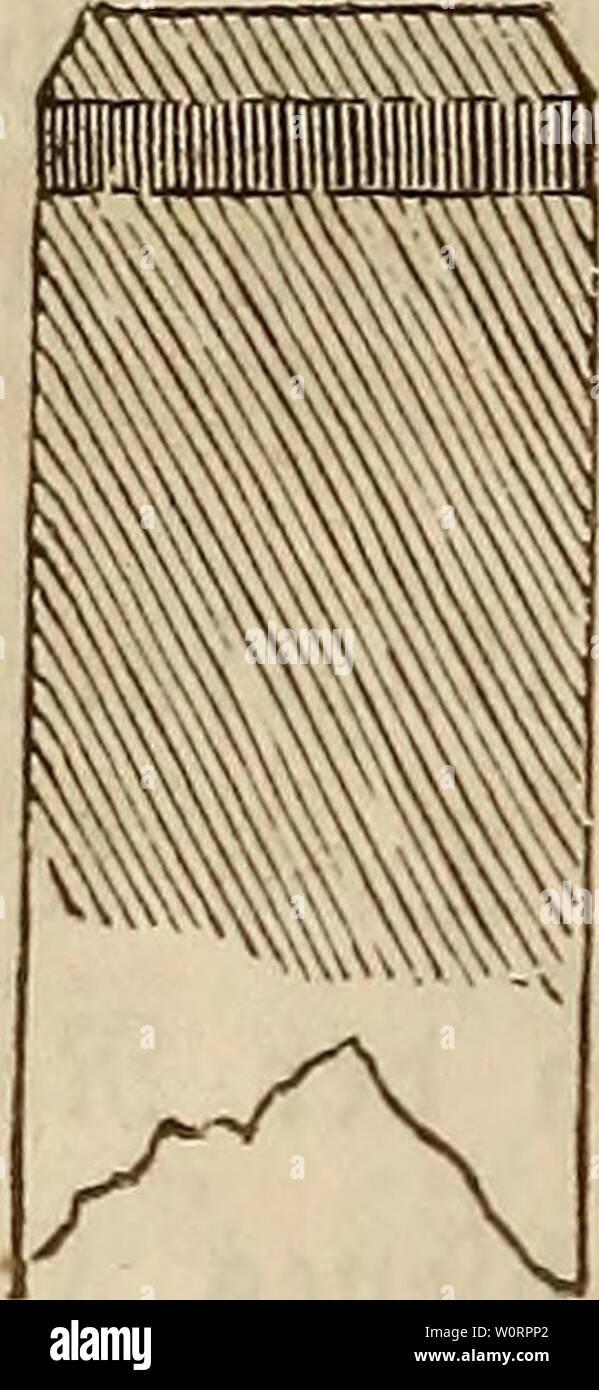 Image d'archive à partir de la page 527 du wiesenbau in seinem der ganzen. Der wiesenbau derwiesenbauinse in seinem ganzen umfange00hafe Année: 1847 - 500 jkrfen oblägen - 33ae gefaxt e$ aua) öftere, sac ber faj $)l'auffüttert ßopfe leia)t; um bieg $u homme wmeiben spfafjlfopf high um einen ben ftarfen eifernen 9?ing, welchen man, tjl ber Pfa£l tief genug, eingetrieben abnehmen unb un un fafjl § fanm Genügen. 259. Jjartem fteftgem 3n 33oben, dans teingeröll bgl, unb motten 9bie le öftere Jfä£nia)t tiefer einbringen, inbem fplittern; ale etp; dans umlegen unb fola)en gälten alSbann wirb ba$ 23ale)uf Banque D'Images
