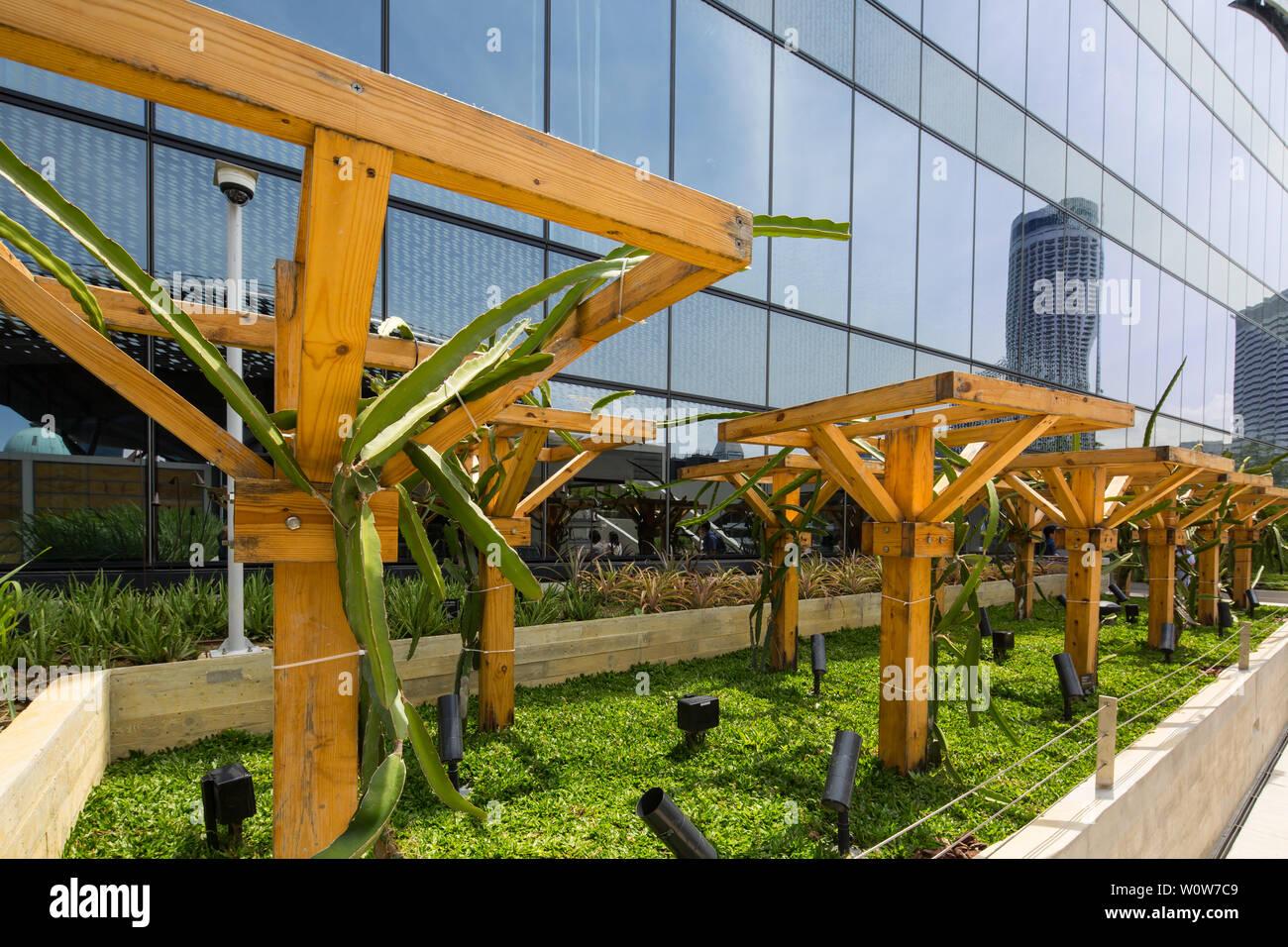 L'agriculture urbaine sur le toit de Funan Mall, Singapour Banque D'Images