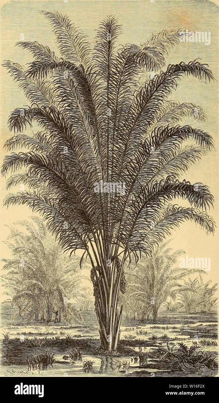 Image d'archive à partir de la page 271 de Die Loango-Expedition ausgesandt von der. Banque D'Images