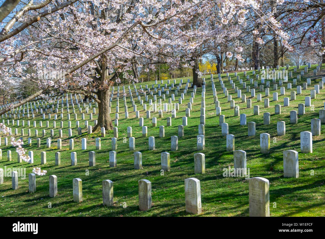 Avis de pierres tombales dans le Cimetière National d'Arlington au printemps, Washington D.C., Etats-Unis d'Amérique, Amérique du Nord Banque D'Images