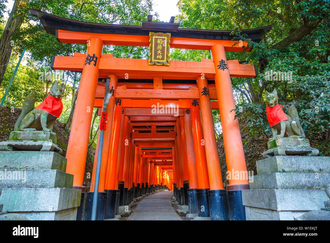 Mille torii vermillon portes du Sanctuaire Shinto de Fushimi Inari Taisha, au sud de Kyoto, Japon, Asie Banque D'Images