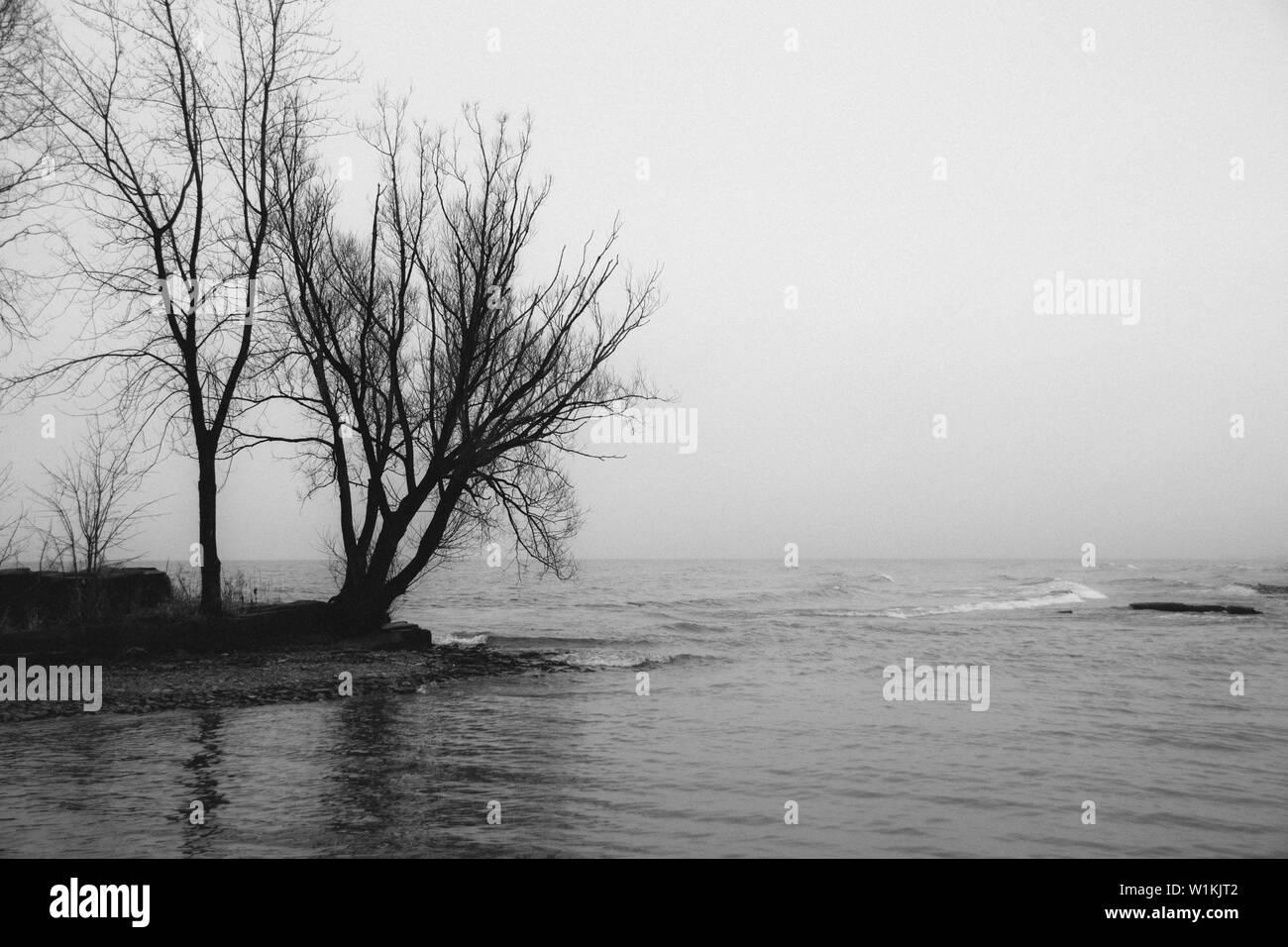C'était un beau jour brumeux. Au moment où je suis sorti avec l'appareil photo, le brouillard commençait à se dissiper. Photo Stock