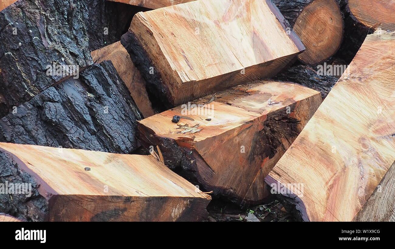 Un tombé gum tree offre un bon bois de chauffage; la première coupe avant de se séparer Photo Stock