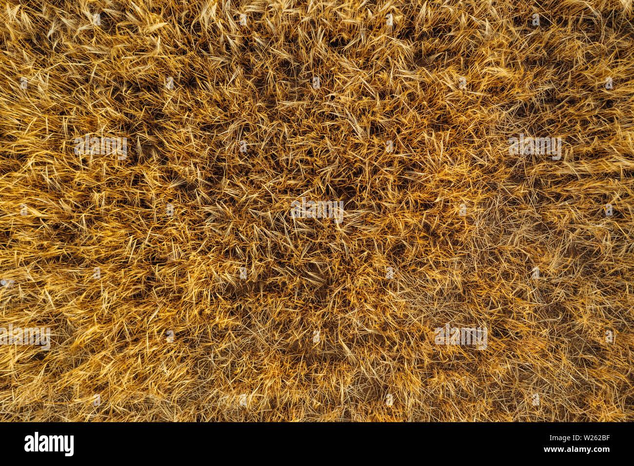 Drone aérien photographie de terres agricoles. Les parcelles agricoles de terres en Pologne, Europe Banque D'Images