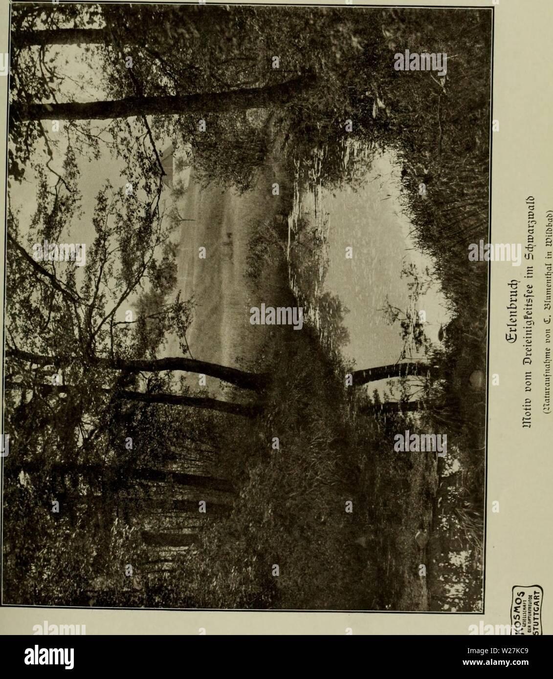 Image d'archive à partir de la page 288 de la Das Leben der Pflanze (1906). Das Leben der Pflanze daslebenderpflan04fran Année: 1906 Banque D'Images