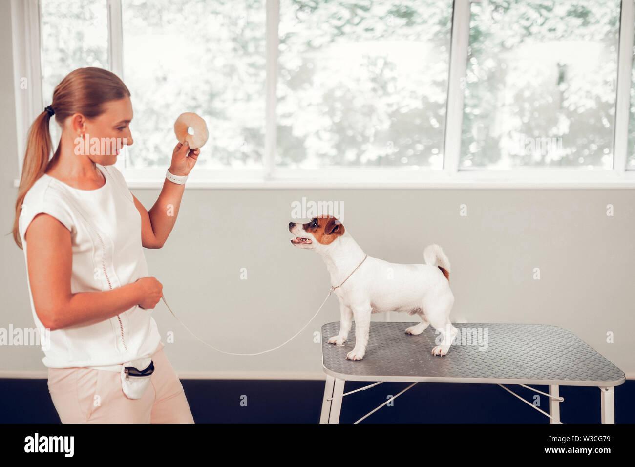 Spécialiste de l'EFP à jouer. Appel qualifié spécialiste chien jouant avec mignon chien blanc debout sur une table en métal Photo Stock