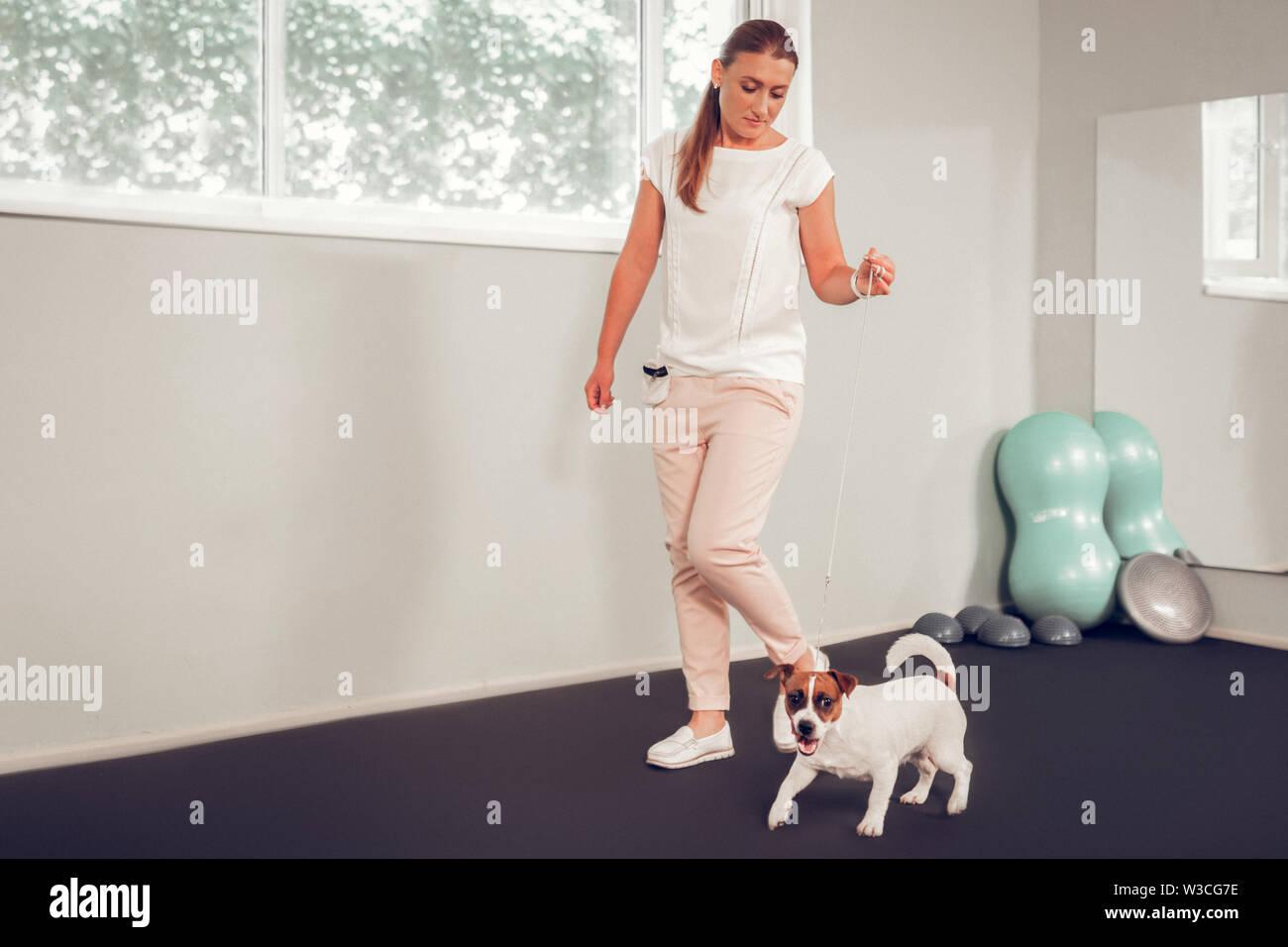Chien élégant spécialiste. Beau chien élégant chemisier blanc spécialiste walking with dog Photo Stock