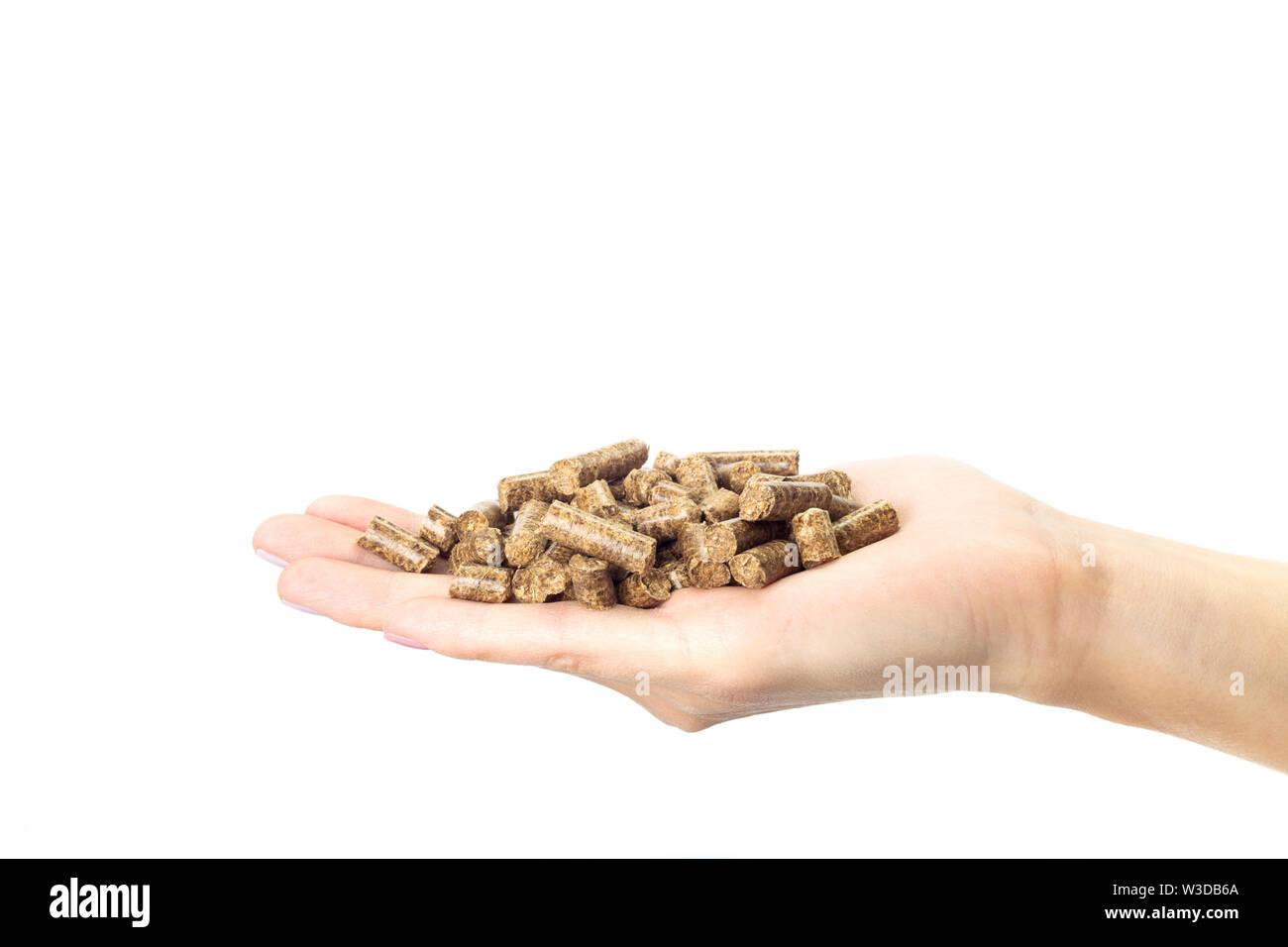 Human hand holding en bois de chauffage Photo Stock