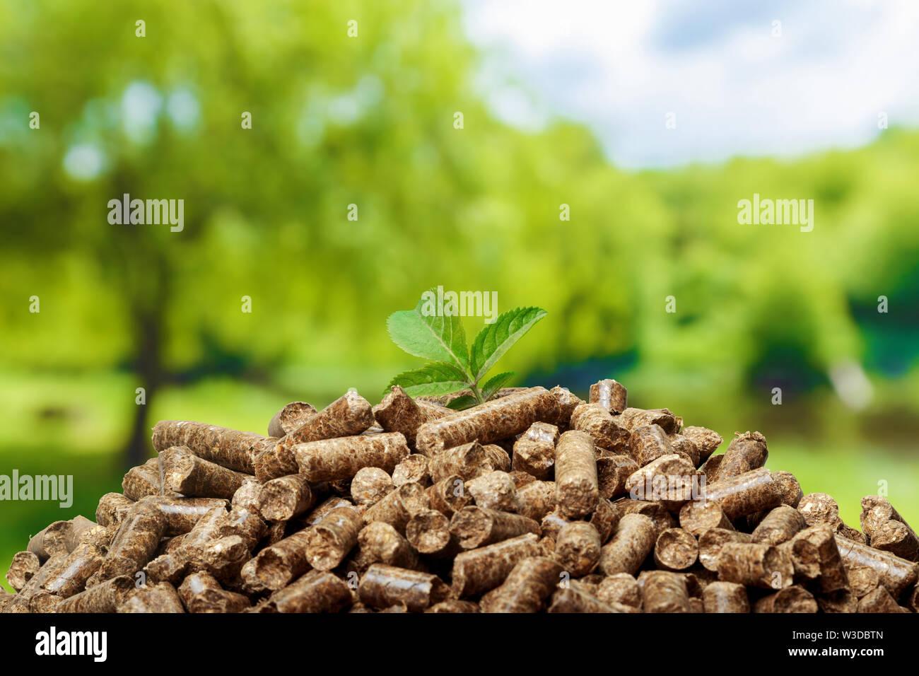 Granulés Bois sur un fond vert. Les biocarburants. Photo Stock