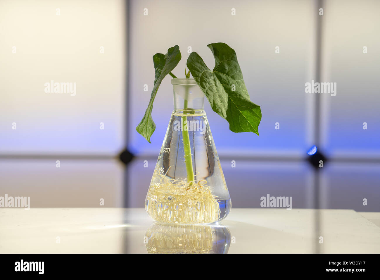 Plante verte dans la fiole chimique de laboratoire Photo Stock