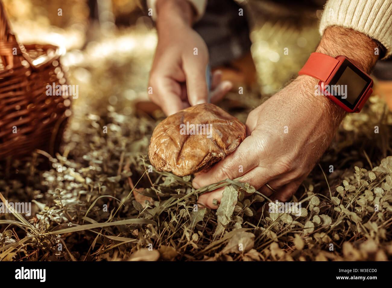 Mains d'un homme d'une grande coupe champignon. Photo Stock