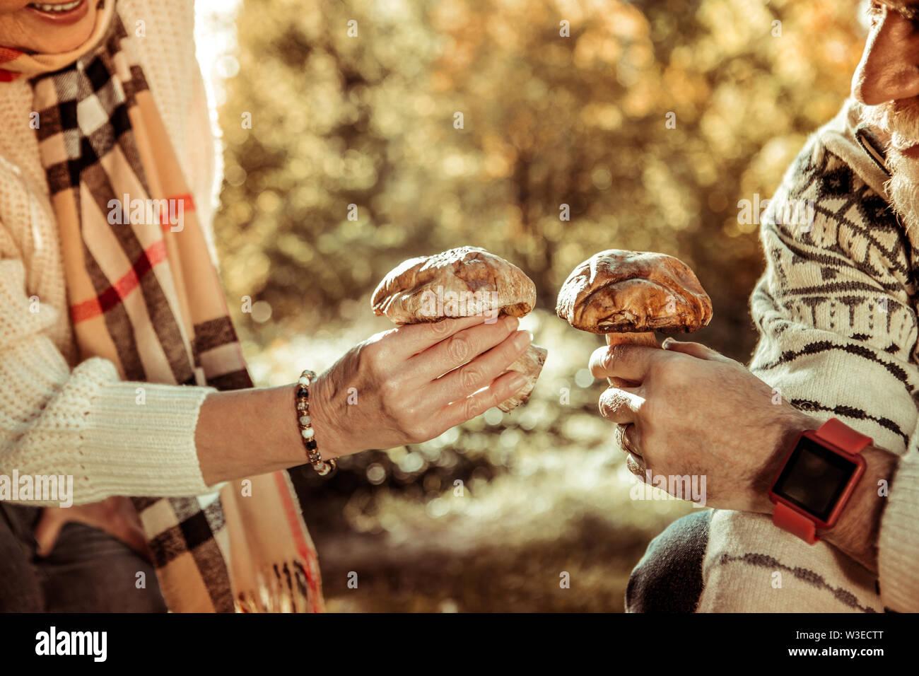 Deux gros champignons dans les mains du mari et de la femme. Photo Stock