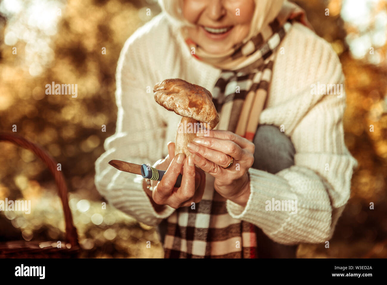 Gros champignon sauvage dans les mains d'une femme. Photo Stock