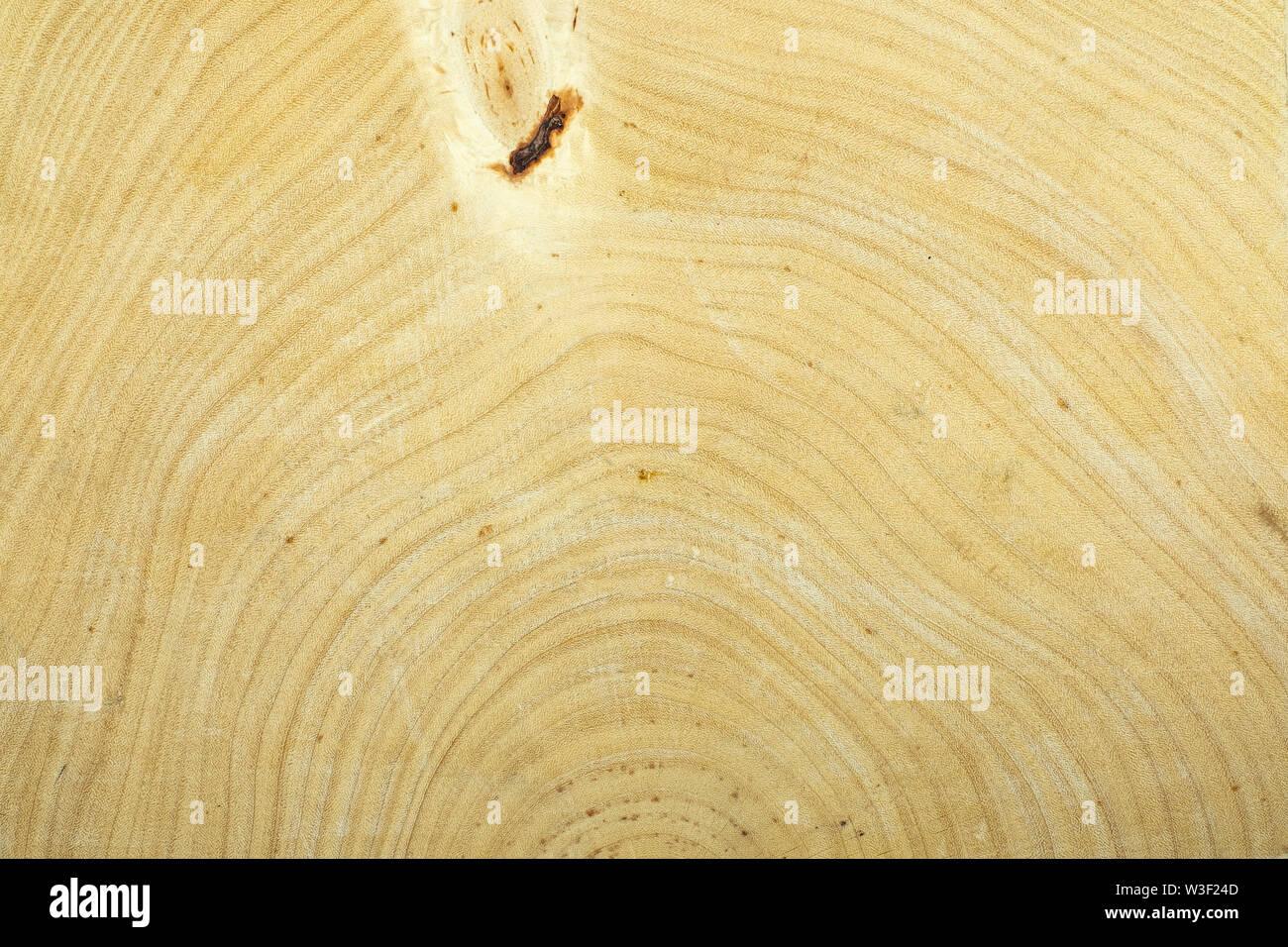 Anneau annuel bois texture de fond de tamarin Photo Stock