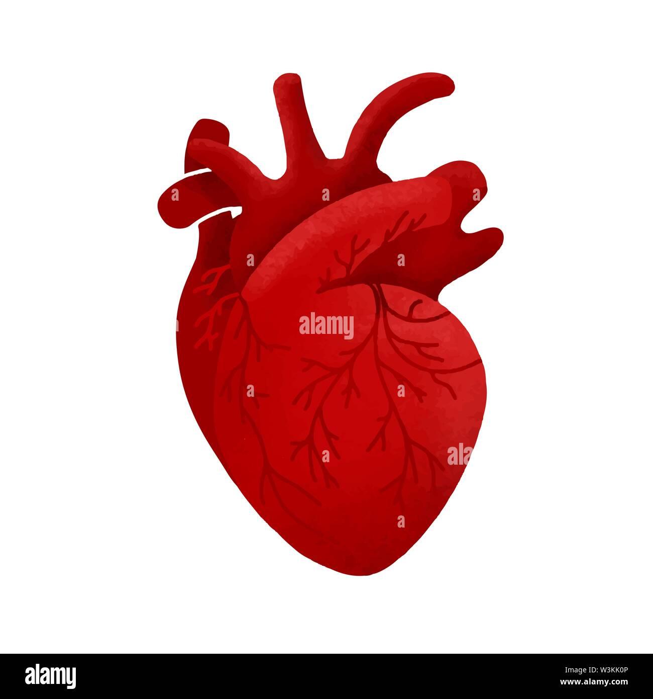 Médecine créative concept. Cœur de l'homme anatomique design dessin animé dans l'icône de style plate illustration vectorielle avec ombres isolé sur fond blanc. Photo Stock