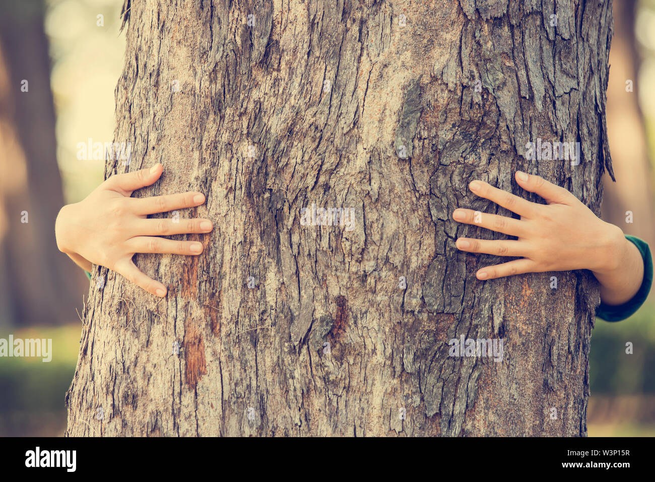 Close-up of hands hugging tree Photo Stock