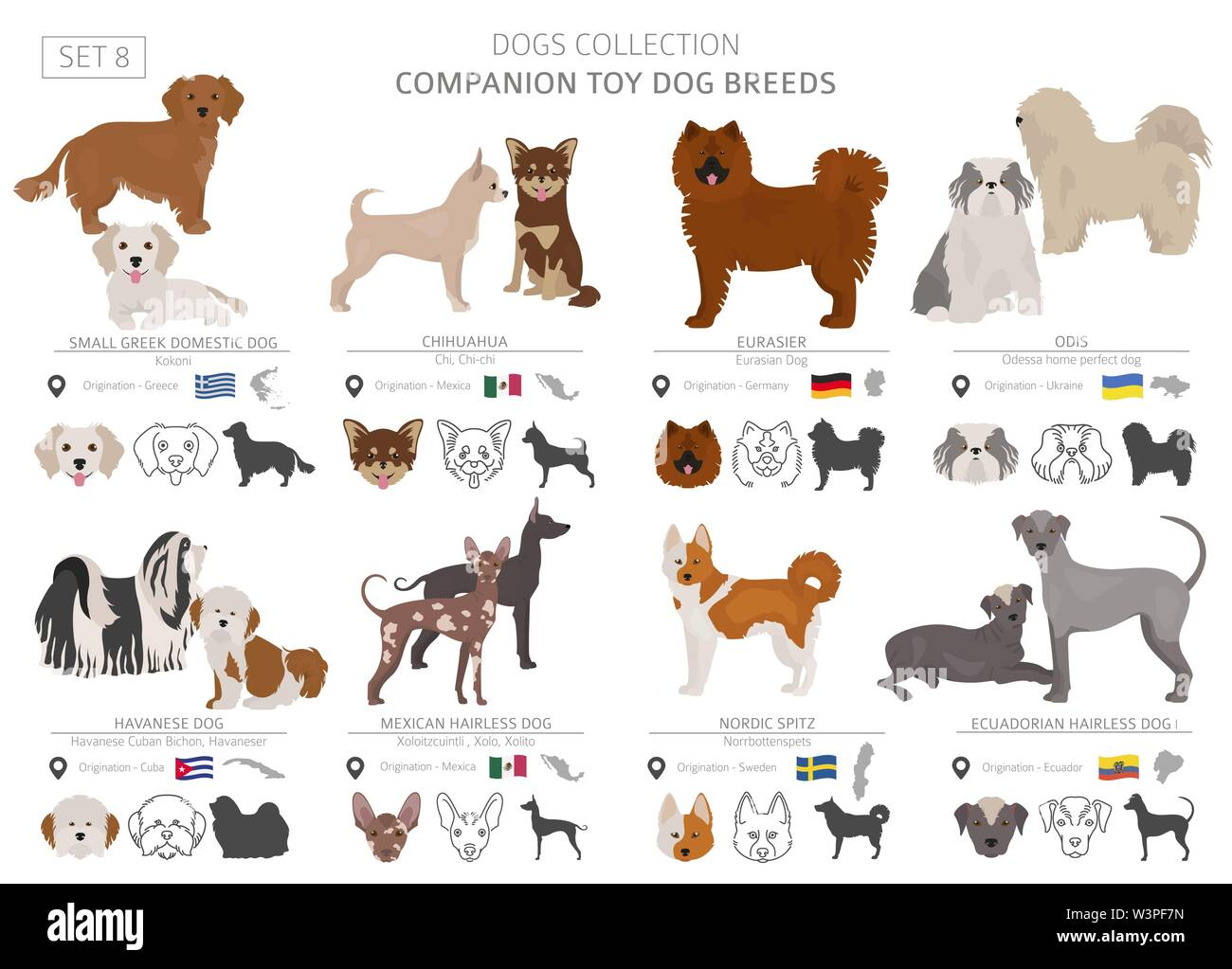 Jouet miniature et de compagnie chiens collection isolated on white. Style plat. Autre couleur et pays d'origine. Vector illustration Photo Stock
