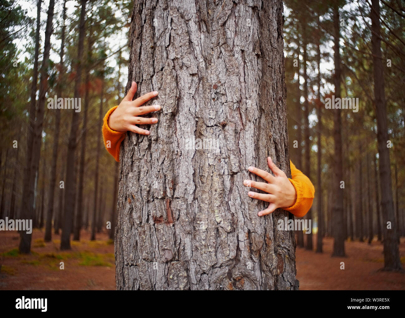 Close-up woman's hand hugging tree trunk Photo Stock