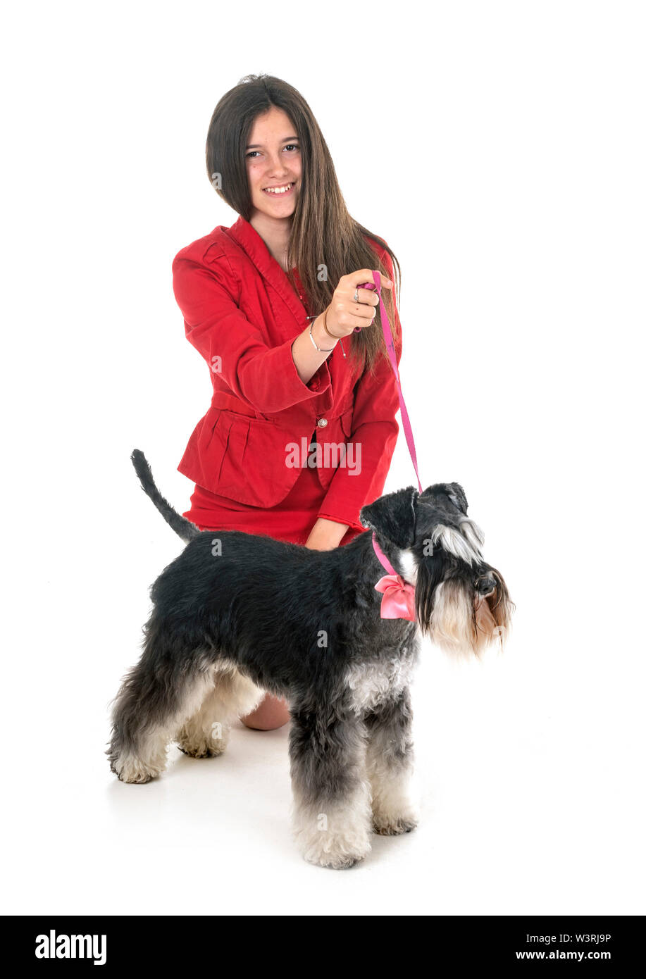 Schnauzer nain et woman in front of white background Banque D'Images