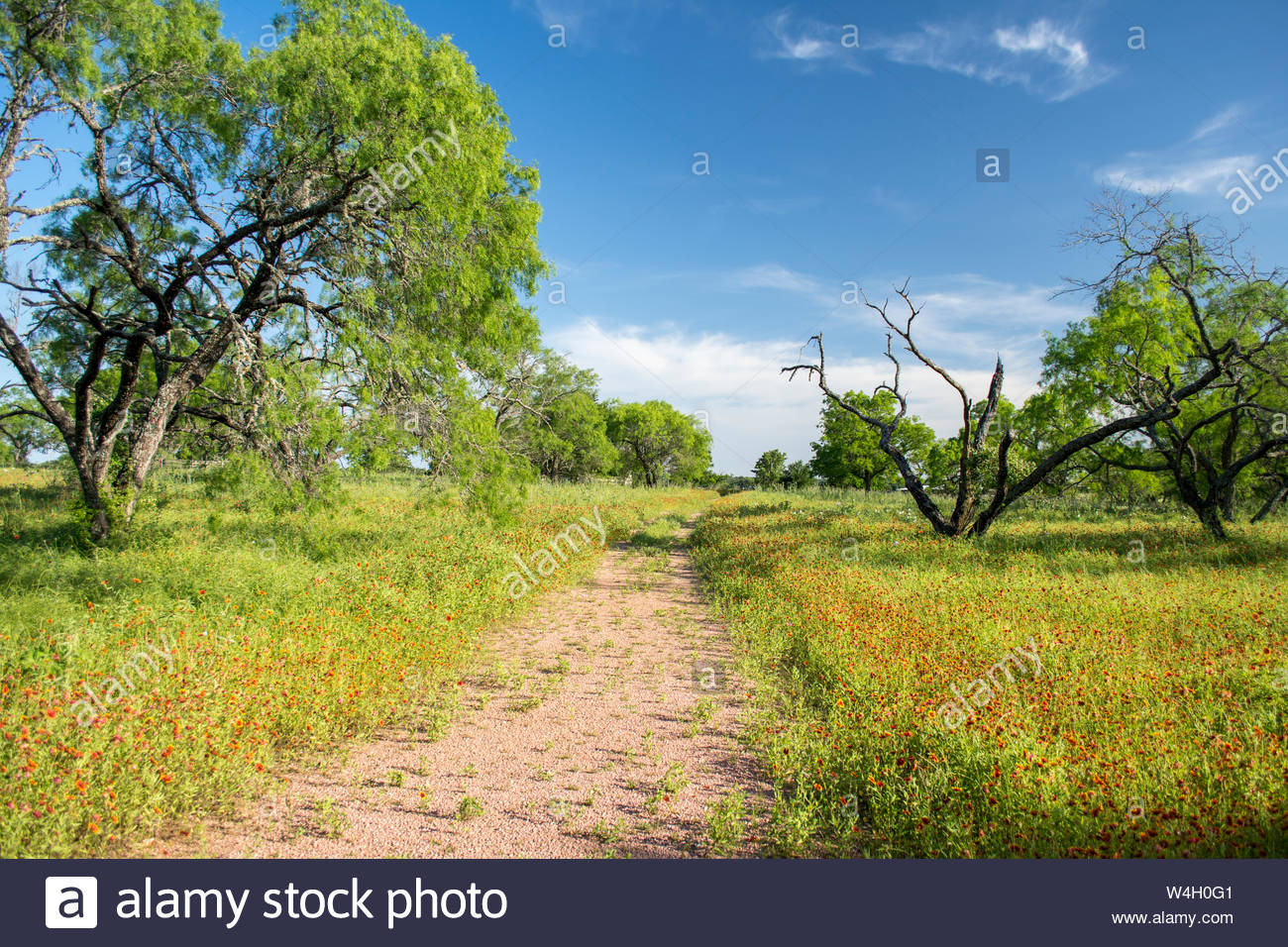 Texas Hill Country Scene. Texas Hill Country Paysage. Country Lane et de fleurs. Country lane, Texas Hill Country fleurs sauvages, les mesquites et le ciel. Banque D'Images