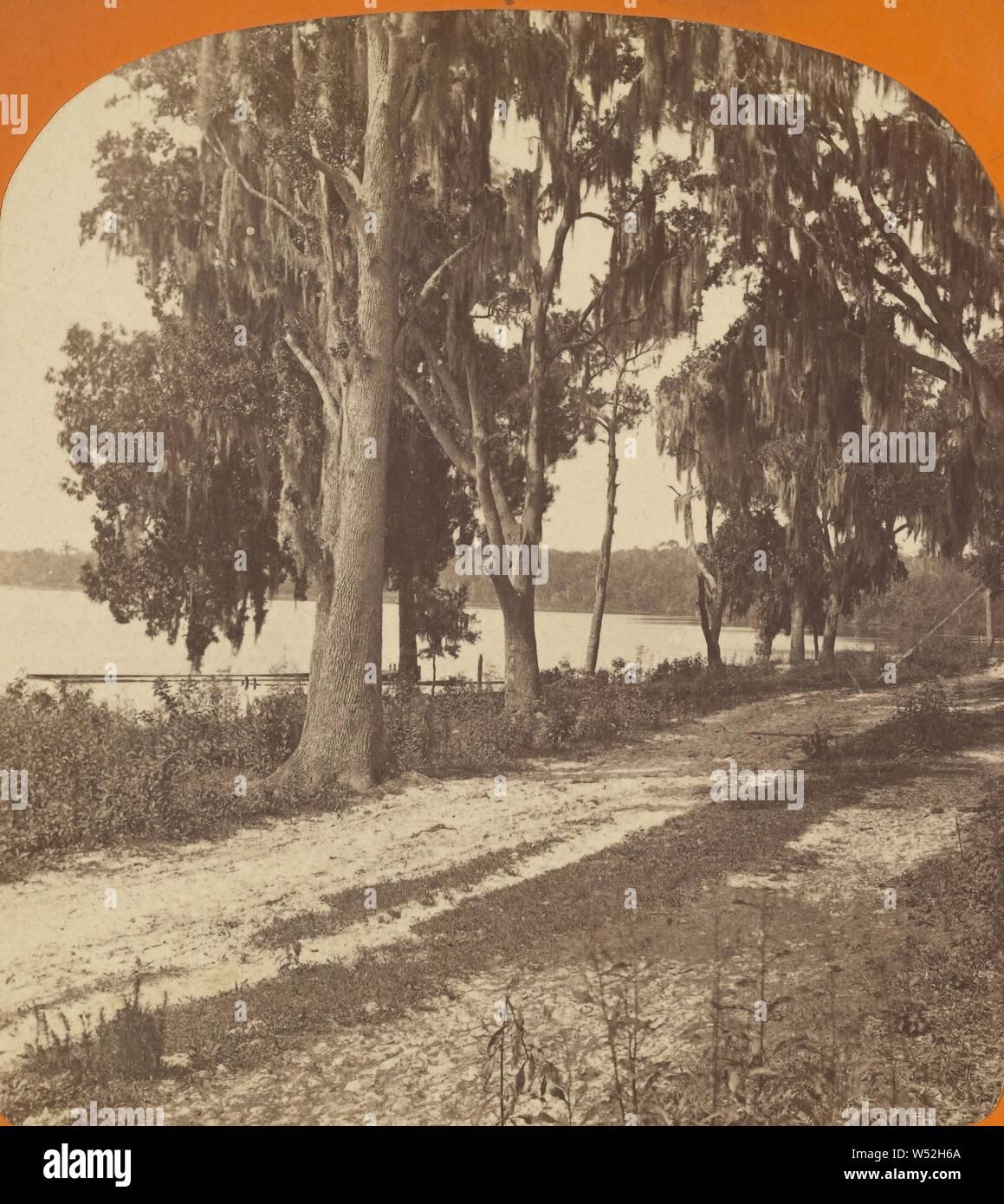 Saint John's River, Palatka., A.D. White (États-Unis, actif 1870), années 1870, à l'albumine argentique Banque D'Images