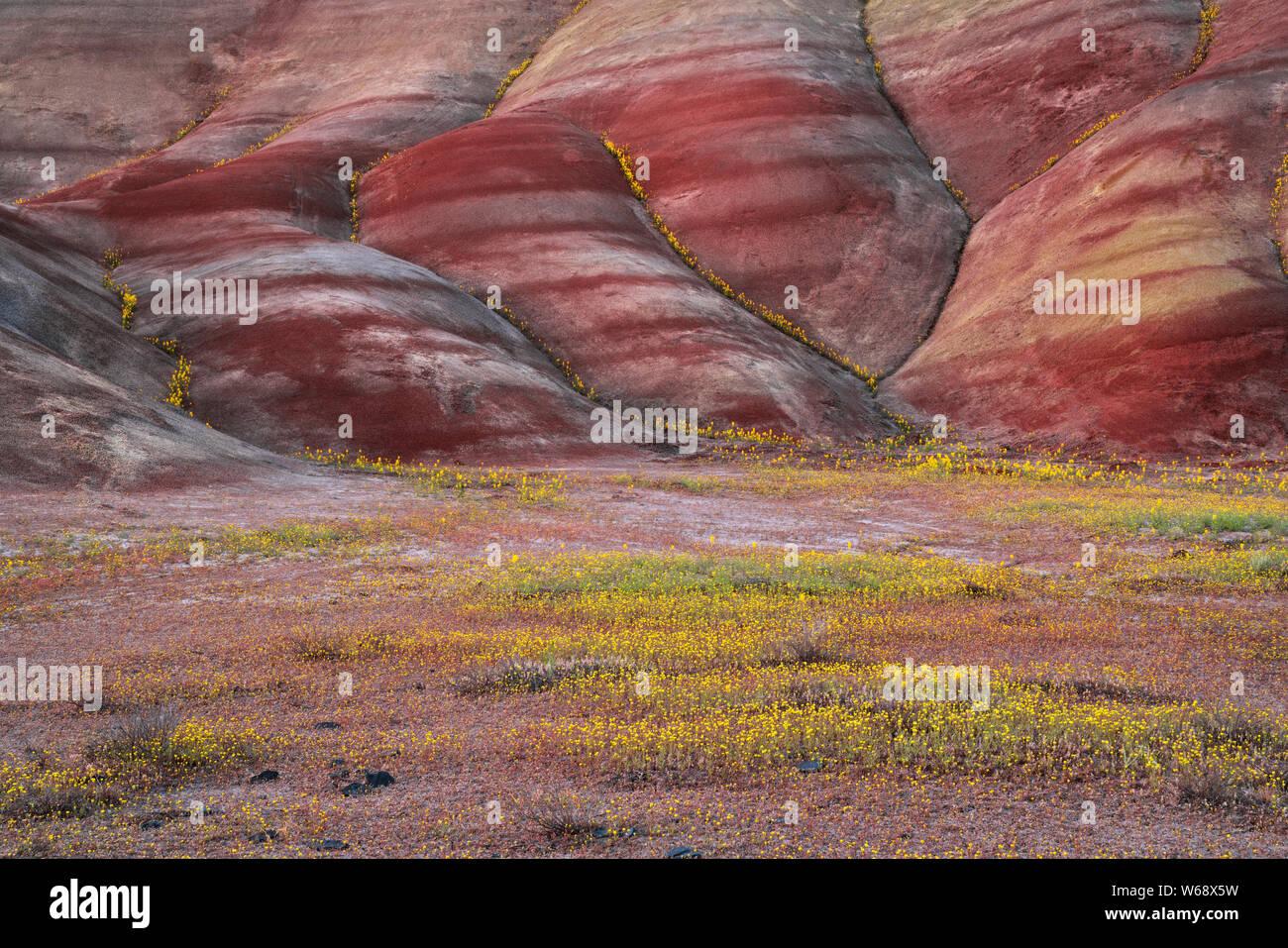 Le crépuscule civil glow sur la prolifération printanière de fleurs des champs à la base de l'unité centrale en collines peintes Oregon's John Day Fossil d'appoint. Banque D'Images