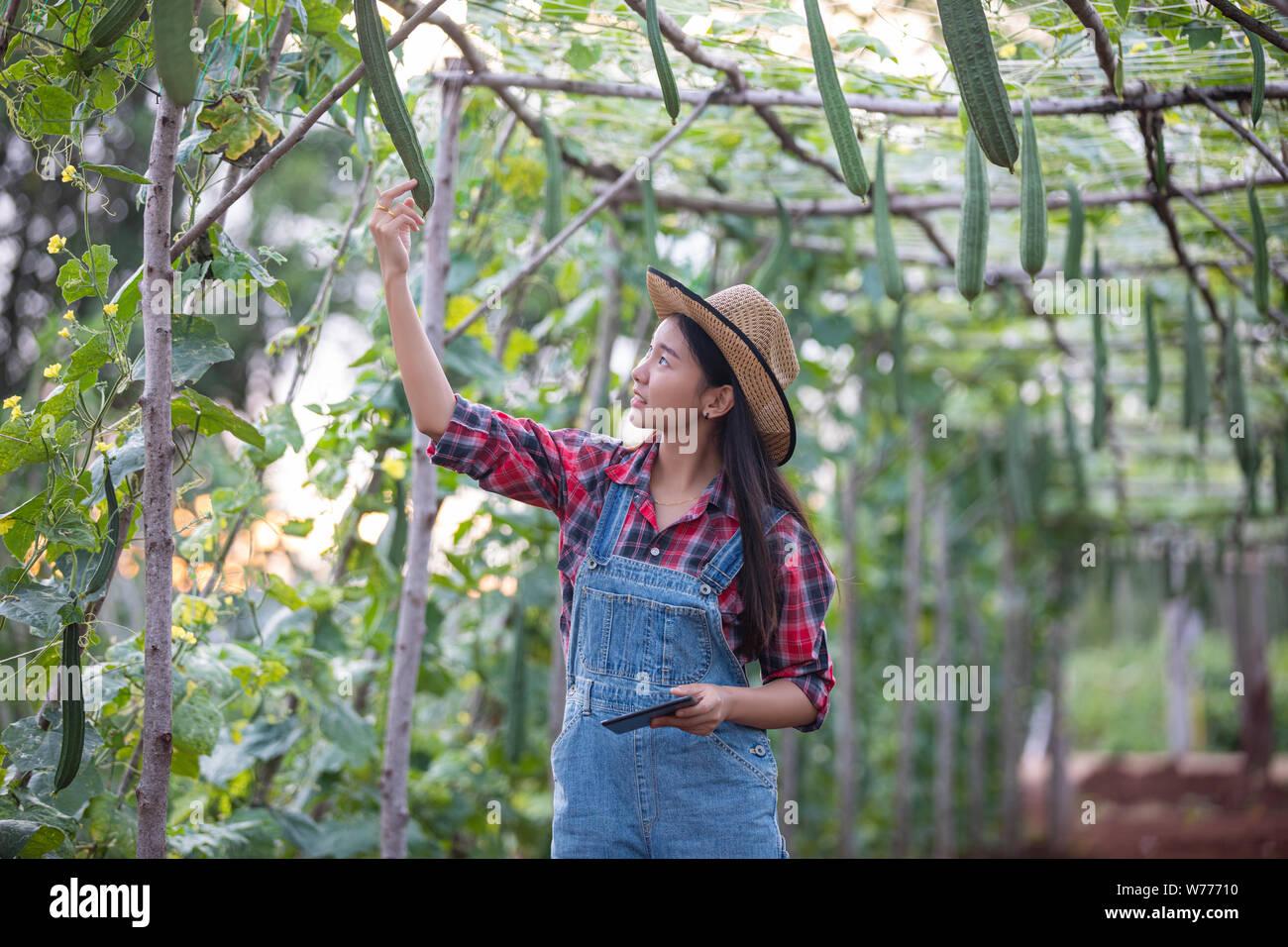 Les femmes Asias ingénieur agronome et agriculteur en utilisant la technologie de l'inspection dans l'agriculture et le champ de légumes biologiques Banque D'Images
