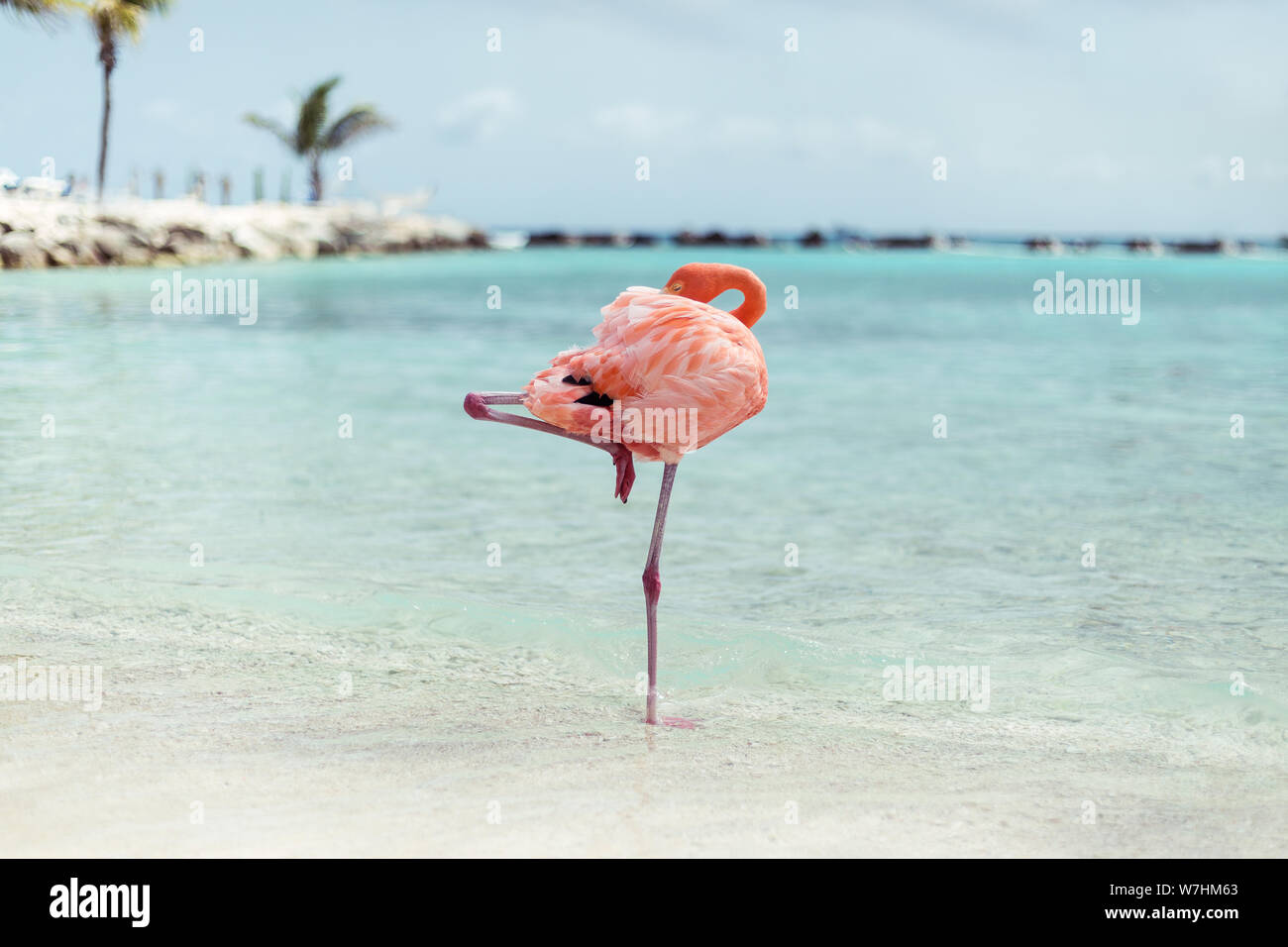 Suis Flamingos auf Flamingo Beach, Aruba niederländische Antillen, Flamingo am Strand Banque D'Images