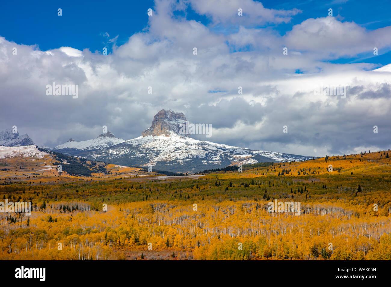 La couleur de l'automne de pointe dans les tremblaies ci-dessous Chief Mountain dans le Glacier National Park, Montana, USA Banque D'Images