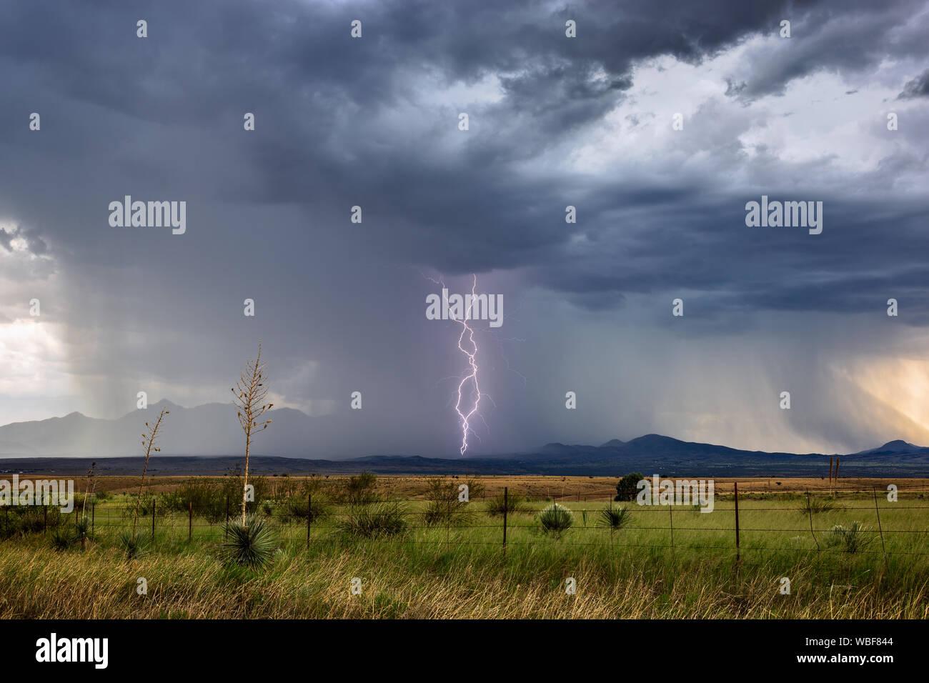 Les éclairs d'un orage de mousson grève près de Sonoita, Arizona. Banque D'Images