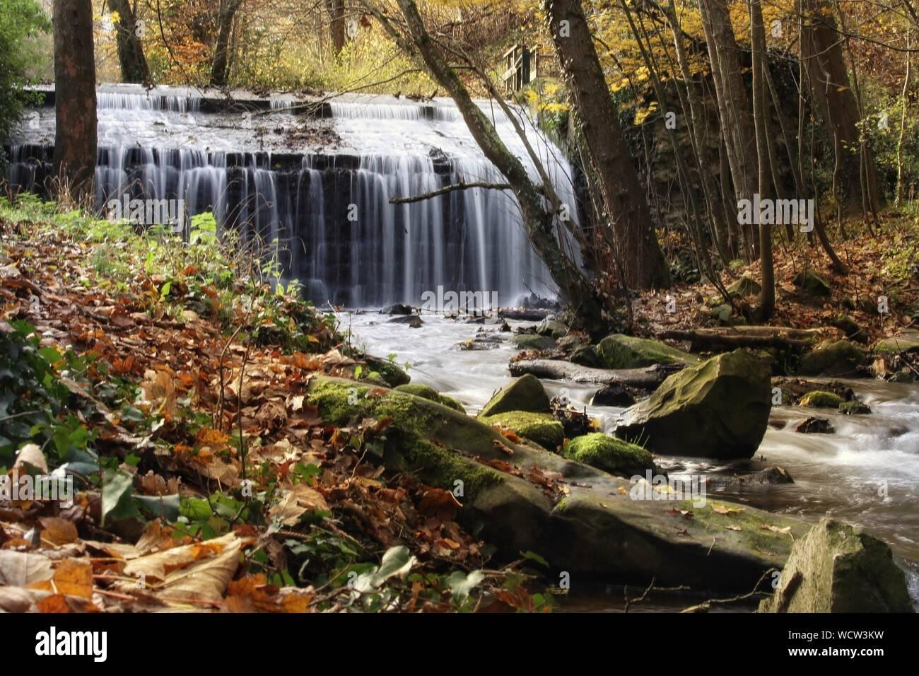 Vue panoramique de la forêt en cascade Banque D'Images