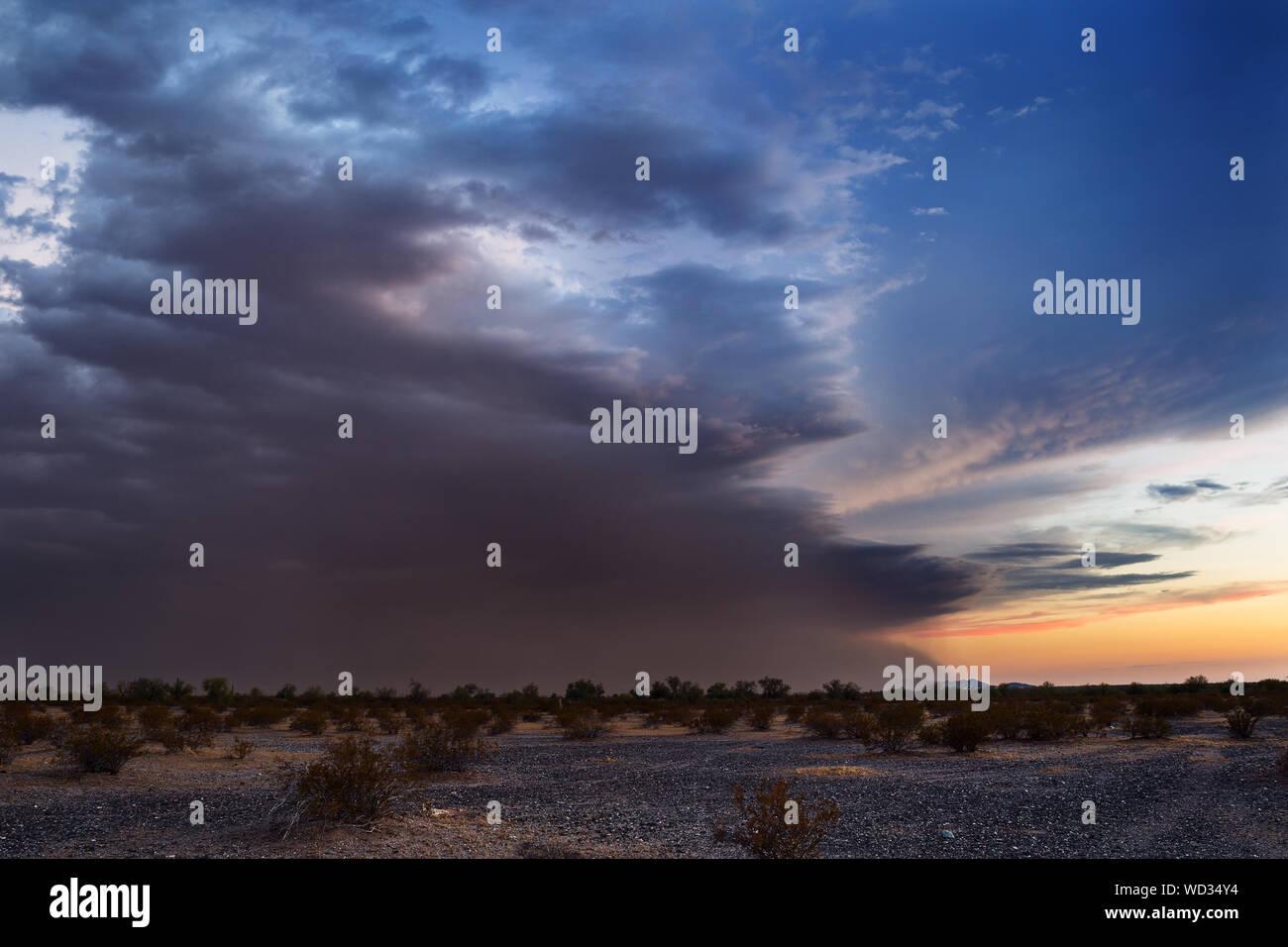 Vue panoramique du désert de Sonora contre ciel nuageux pendant le coucher du soleil Banque D'Images