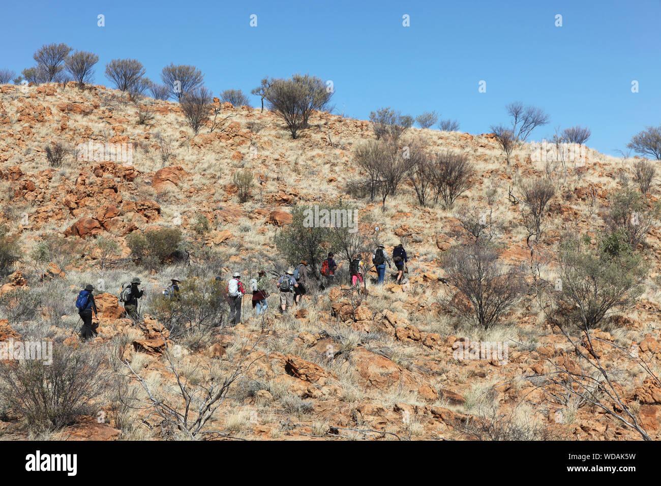 Groupe de trekkeurs, Euro Ridge, Larapinta Trail, West McDonnell Ranges, Territoire du Nord, Australie Banque D'Images