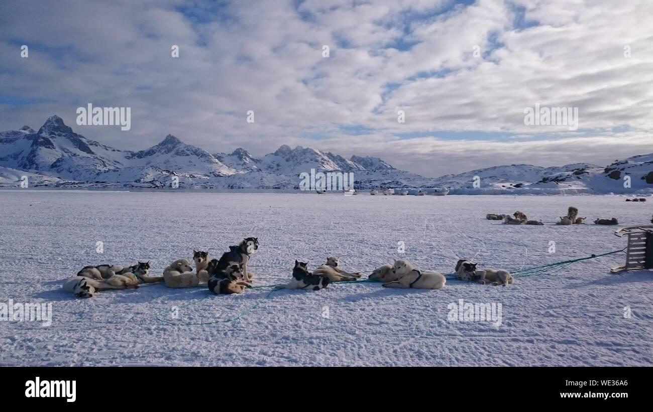 Voir des chiens sur le terrain couvert de neige contre le ciel Banque D'Images