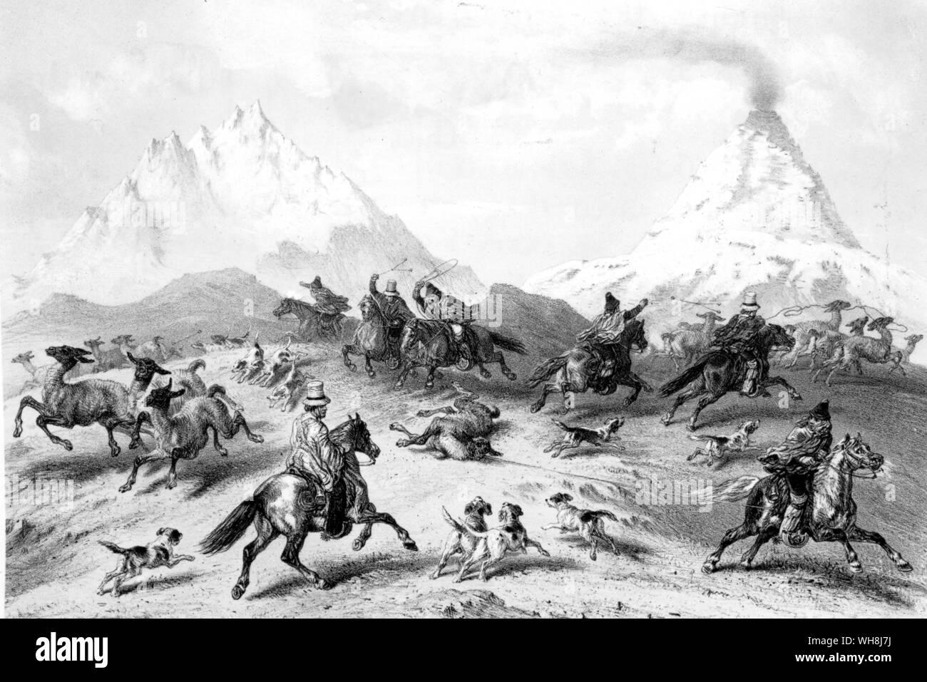 """La chasse les guanacos. """"Dans un grand nombre de leurs habitudes qu'ils sont comme des moutons dans un troupeau. Ainsi, lorsqu'ils voient approcher les hommes dans plusieurs directions à cheval, ils sont désorientés et ne savent pas quoi faire."""" Darwin et le Beagle par Alan Moorhead, page 146. Banque D'Images"""