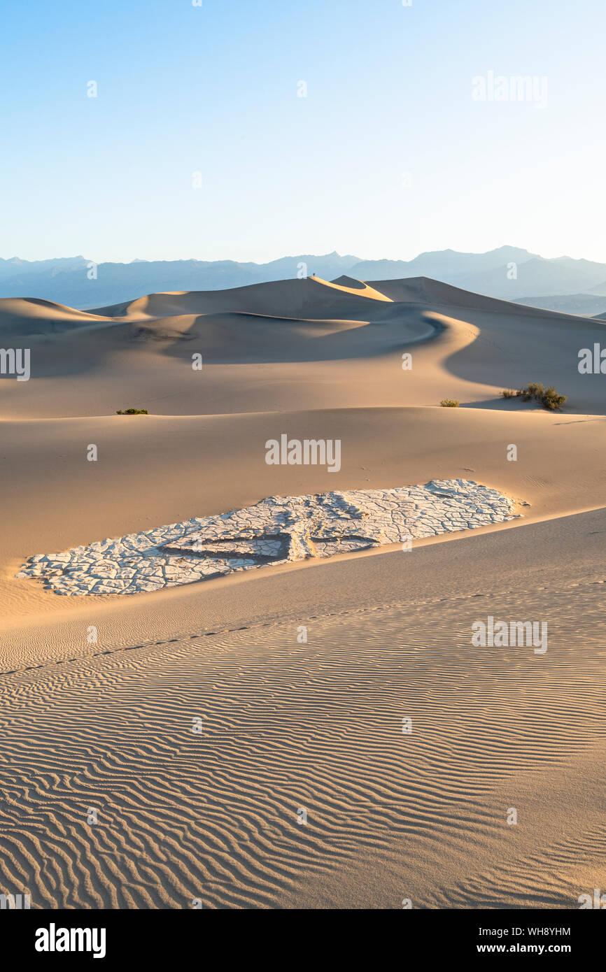 Télévision Mesquite sand dunes in Death Valley National Park, California, États-Unis d'Amérique, Amérique du Nord Banque D'Images