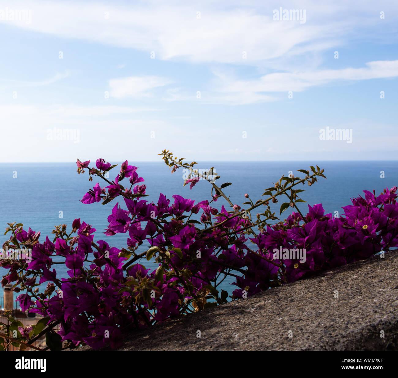 Paysage mer ligurienne avec ciel bleu avec des fleurs violettes amd nuageux Banque D'Images