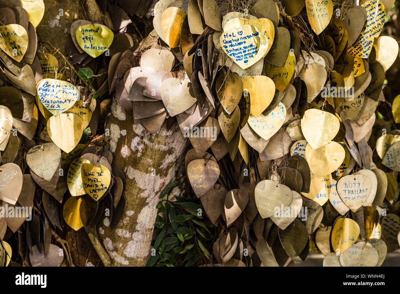 Écrire vos souhaits sur l'or Bodhi suspendus sur une tige métallique sous l'arbre. Close up de l'or les feuilles colorées de l'arbre des désirs dans le temple bouddhiste Banque D'Images