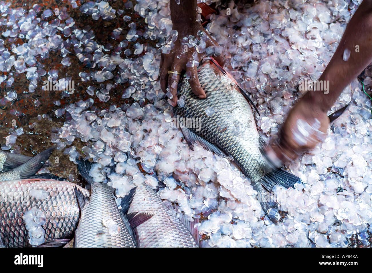 Nettoyage du poisson pêcheur après avoir vendu du poisson au marché de poissons local au Bangladesh, le style de vie rural urbain de rue photo Bangladesh hilsha ilsha padma Banque D'Images