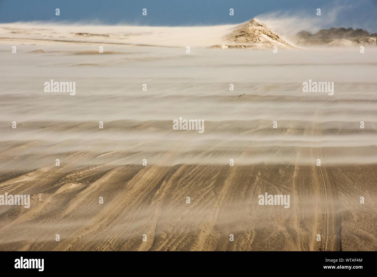 Tempête de sable dans le Parc National de la Lagoa do Peixe Banque D'Images