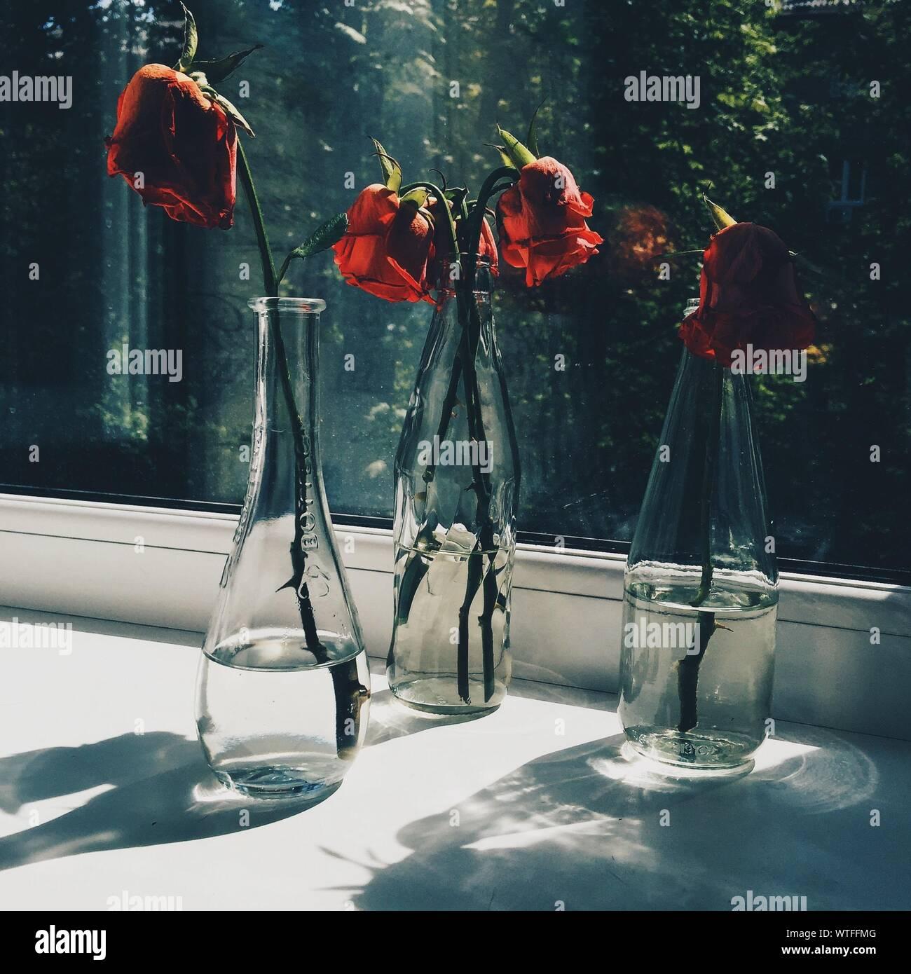 Vase en verre Roses fanées par fenêtre Banque D'Images