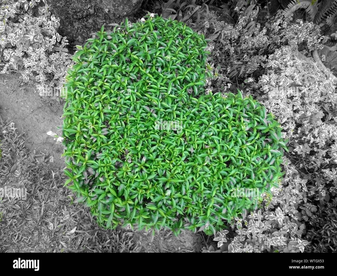 Close-up of cactus poussant sur Domaine Banque D'Images