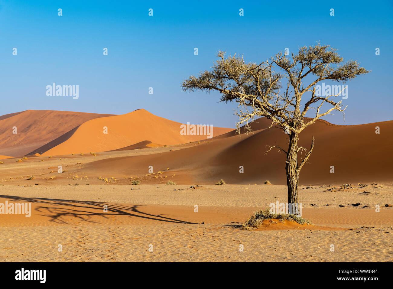 Dunes de sable, Sossusvlei, Namib-Naukluft National Park, Sesriem, Namibie Banque D'Images