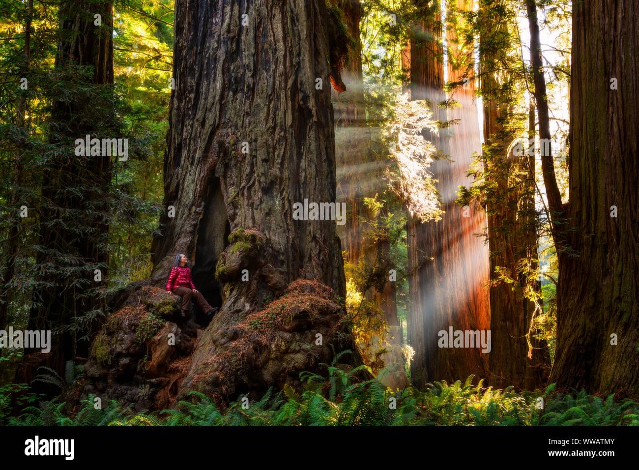 Une femme à l'intérieur d'un séquoia géant et redwood avec rayons de soleil venant à travers les arbres le long de la côte californienne à l'état et National Redwoods Banque D'Images