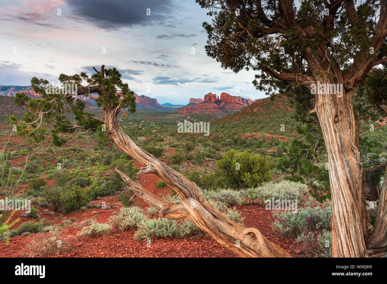Cathedral Rock, Sedona, Arizona, États-Unis d'Amérique, Amérique du Nord Banque D'Images